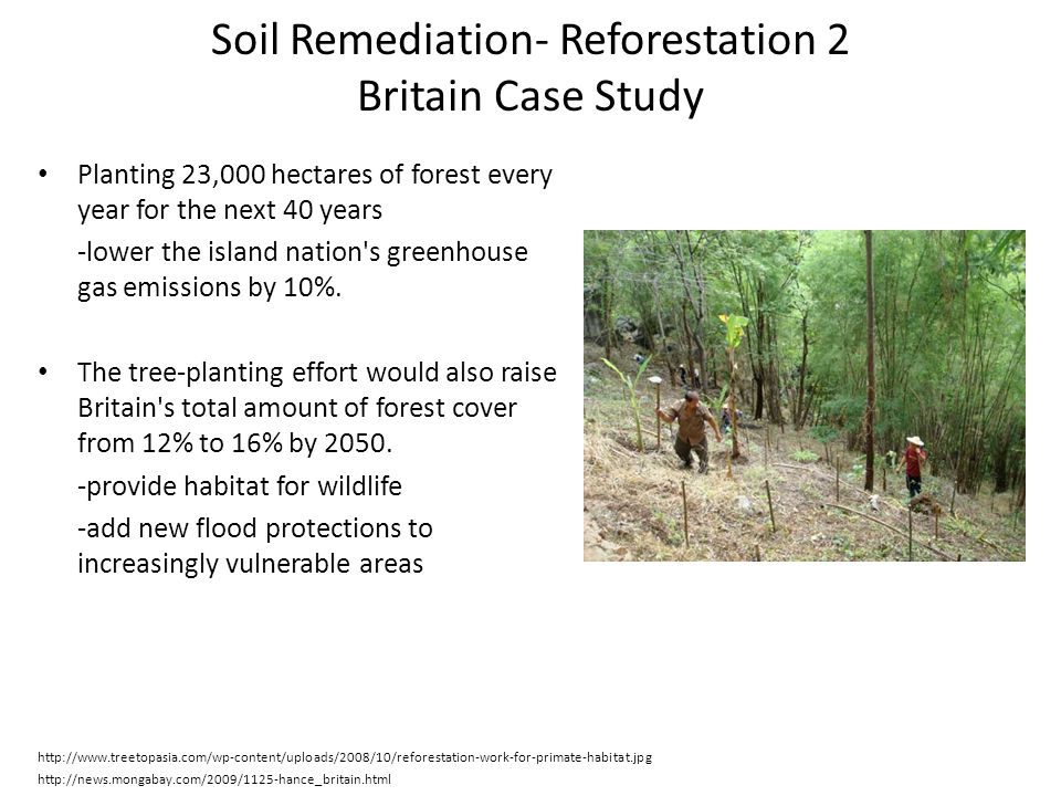Soil Remediation- Reforestation 2 Britain Case Study Planting 23,000 hectares of forest every year for the next 40 years -lower the island nation's gr