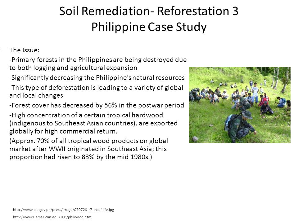 Soil Remediation- Reforestation 3 Philippine Case Study The Issue: -Primary forests in the Philippines are being destroyed due to both logging and agr