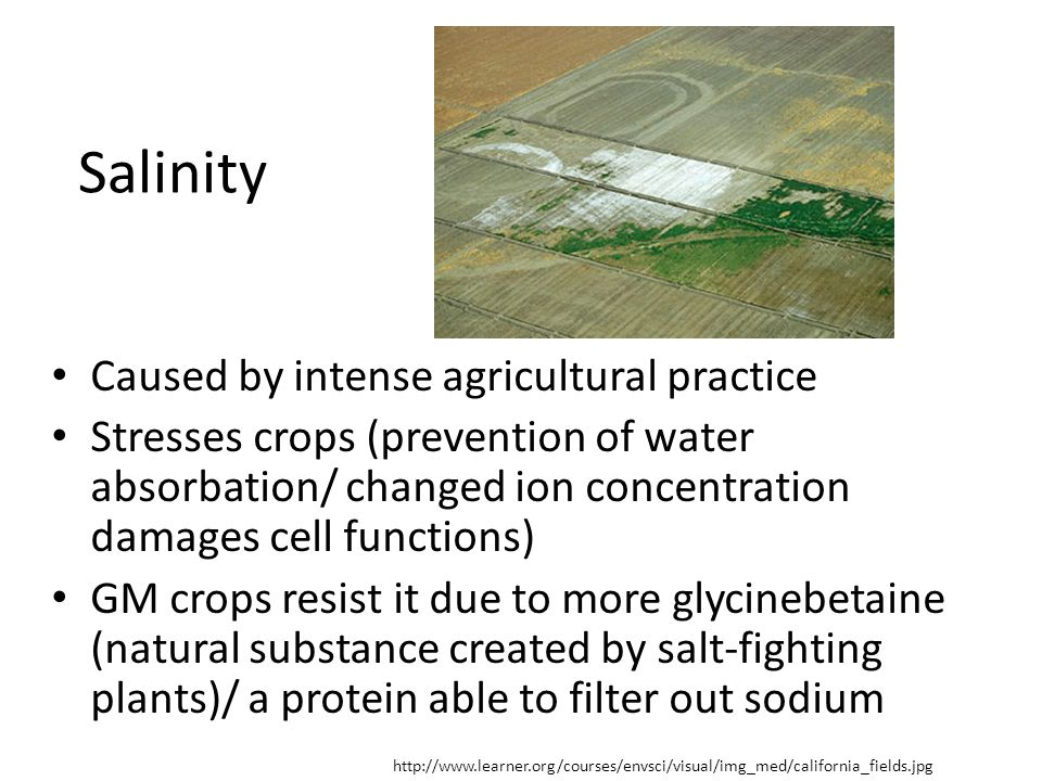 Salinity Caused by intense agricultural practice Stresses crops (prevention of water absorbation/ changed ion concentration damages cell functions) GM