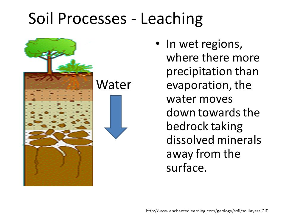 Soil Processes - Leaching In wet regions, where there more precipitation than evaporation, the water moves down towards the bedrock taking dissolved m
