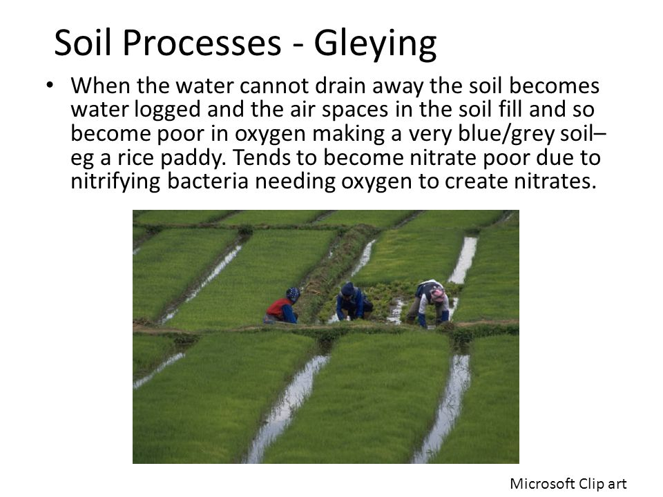 If you can't remediate the soil maybe you could use GM Crops Kristen Shull http://www.lifeinthemixtalk.com/wp-content/uploads/2009/08/gm-crops.jpg