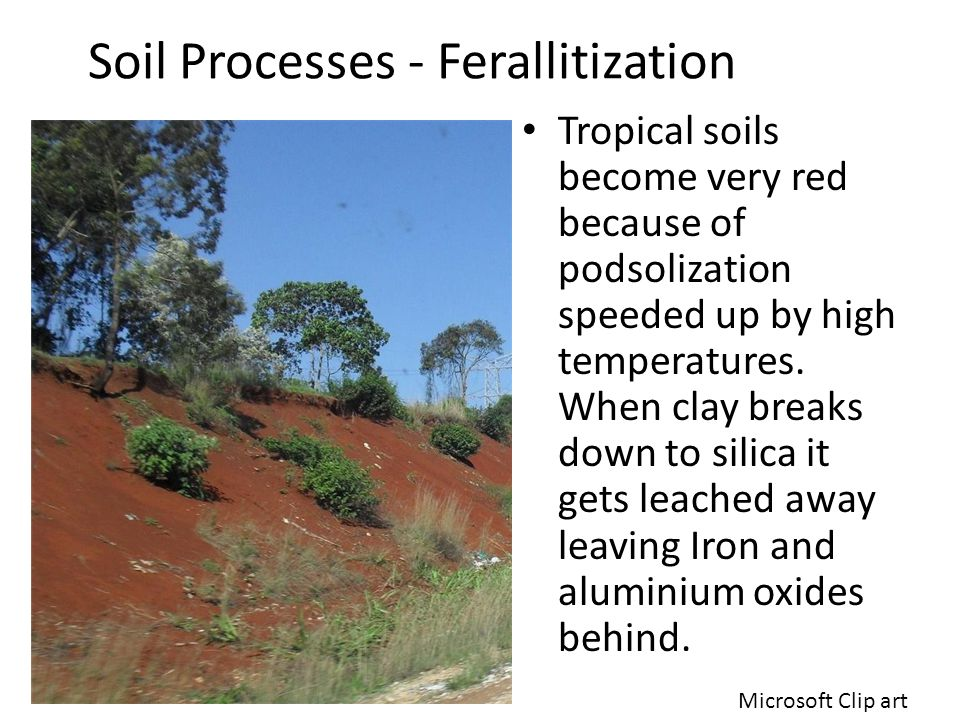 Soil Remediation - Set-Aside 1- Carl Introduced as political measure in 1988 by European Union.