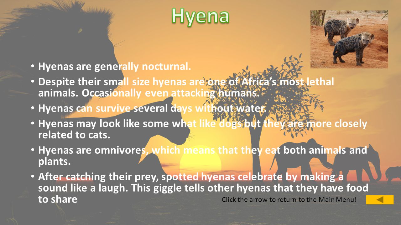 Hyenas are generally nocturnal.