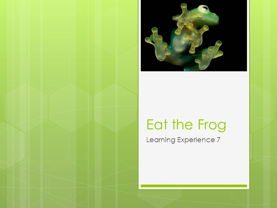 Eat the Frog Learning Experience 7