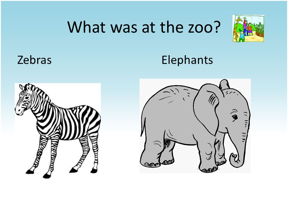 What was at the zoo ZebrasElephants