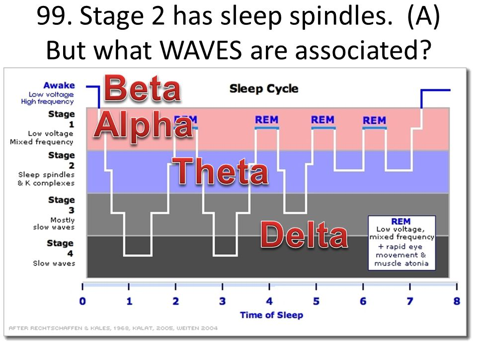 99. Stage 2 has sleep spindles. (A) But what WAVES are associated?