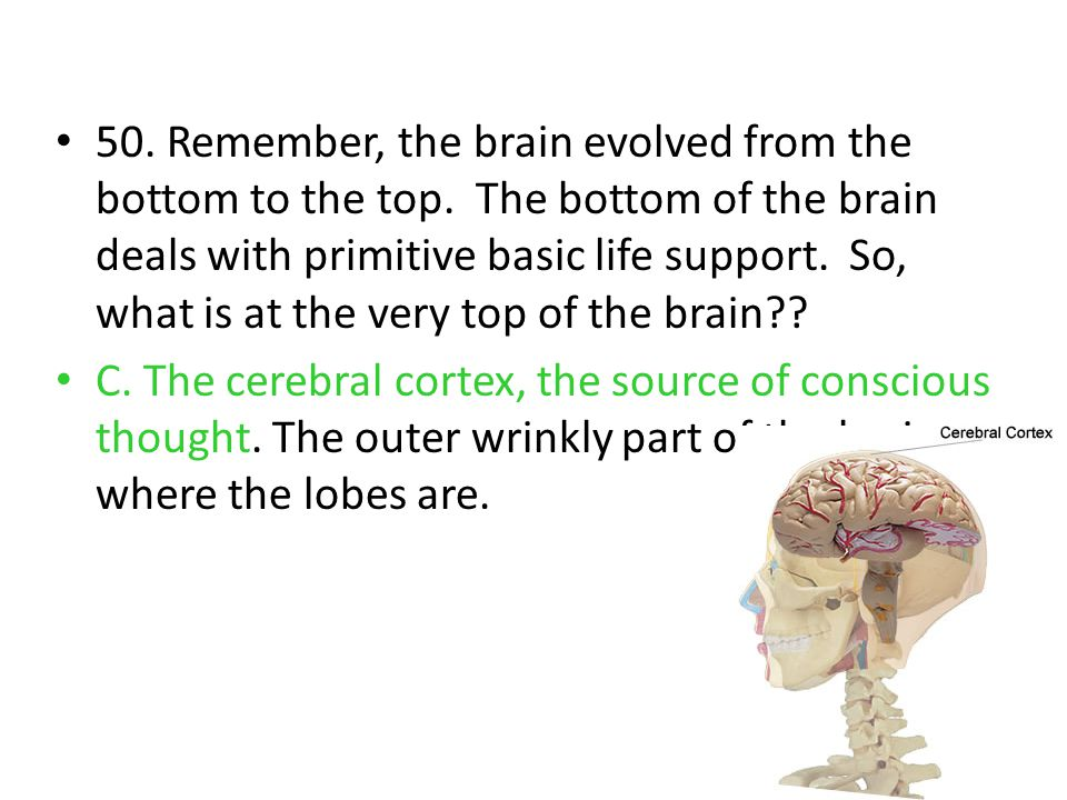 50. Remember, the brain evolved from the bottom to the top. The bottom of the brain deals with primitive basic life support. So, what is at the very t