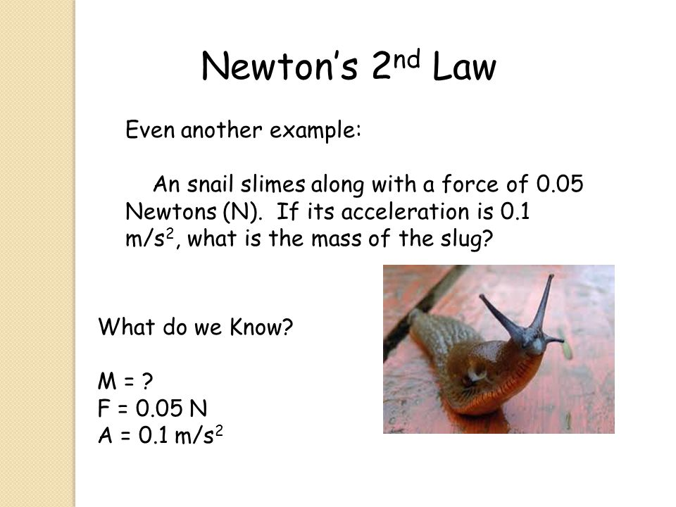 Newton's 2 nd Law Even another example: An snail slimes along with a force of 0.05 Newtons (N). If its acceleration is 0.1 m/s 2, what is the mass of