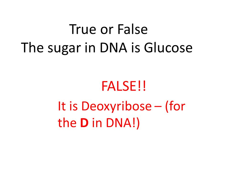 True or False The sugar in DNA is Glucose FALSE!! It is Deoxyribose – (for the D in DNA!)