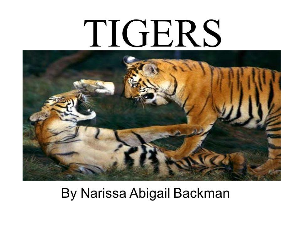 TIGERS By Narissa Abigail Backman