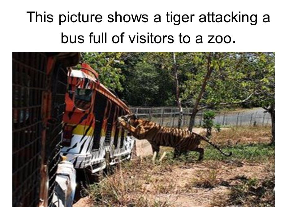 This picture shows a tiger attacking a bus full of visitors to a zoo.
