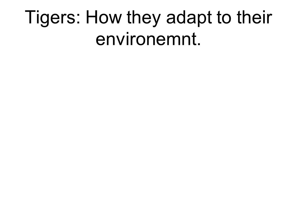 Tigers: How they adapt to their environemnt.
