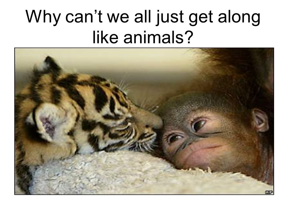 Why can't we all just get along like animals?
