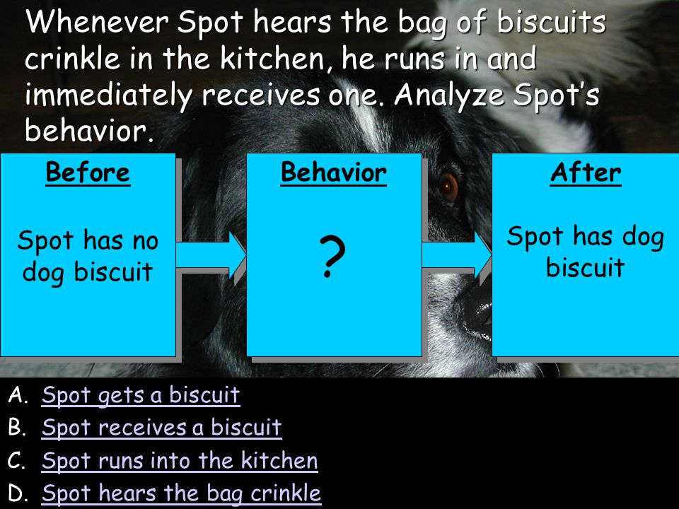 142 A.Spot gets a biscuitSpot gets a biscuit B.Spot receives a biscuitSpot receives a biscuit C.Spot runs into the kitchenSpot runs into the kitchen D.Spot hears the bag crinkleSpot hears the bag crinkle Before Spot has no dog biscuit Before Spot has no dog biscuit Behavior .