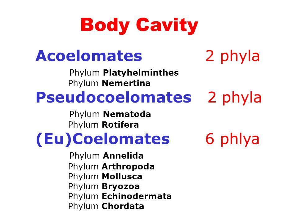 Acoelomates 2 phyla Phylum Platyhelminthes Phylum Nemertina Pseudocoelomates 2 phyla Phylum Nematoda Phylum Rotifera (Eu)Coelomates 6 phlya Phylum Ann