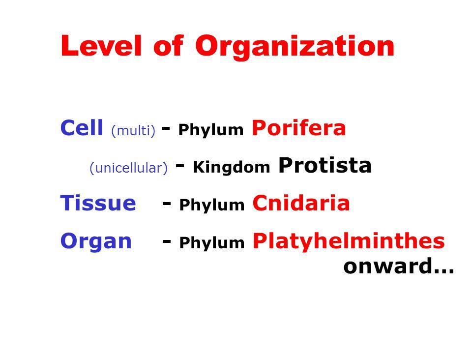 Level of Organization Cell (multi) - Phylum Porifera (unicellular) - Kingdom Protista Tissue - Phylum Cnidaria Organ - Phylum Platyhelminthes onward…