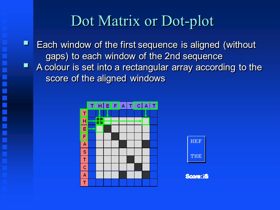 Dot Matrix or Dot-plot  Each window of the first sequence is aligned (without gaps) to each window of the 2nd sequence  A colour is set into a rectangular array according to the score of the aligned windows  Each window of the first sequence is aligned (without gaps) to each window of the 2nd sequence  A colour is set into a rectangular array according to the score of the aligned windows THE ||| THE ||| THE Score: 23 THE HEF THE HEF Score: -5 CAT THE CAT THE Score: -4 HEF THE HEF THE Score: -5