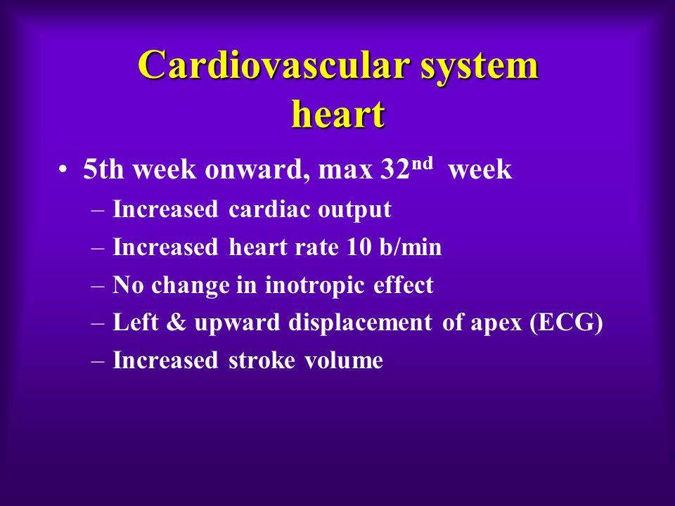 Cardiovascular system heart 5th week onward, max 32 nd week –Increased cardiac output –Increased heart rate 10 b/min –No change in inotropic effect –L