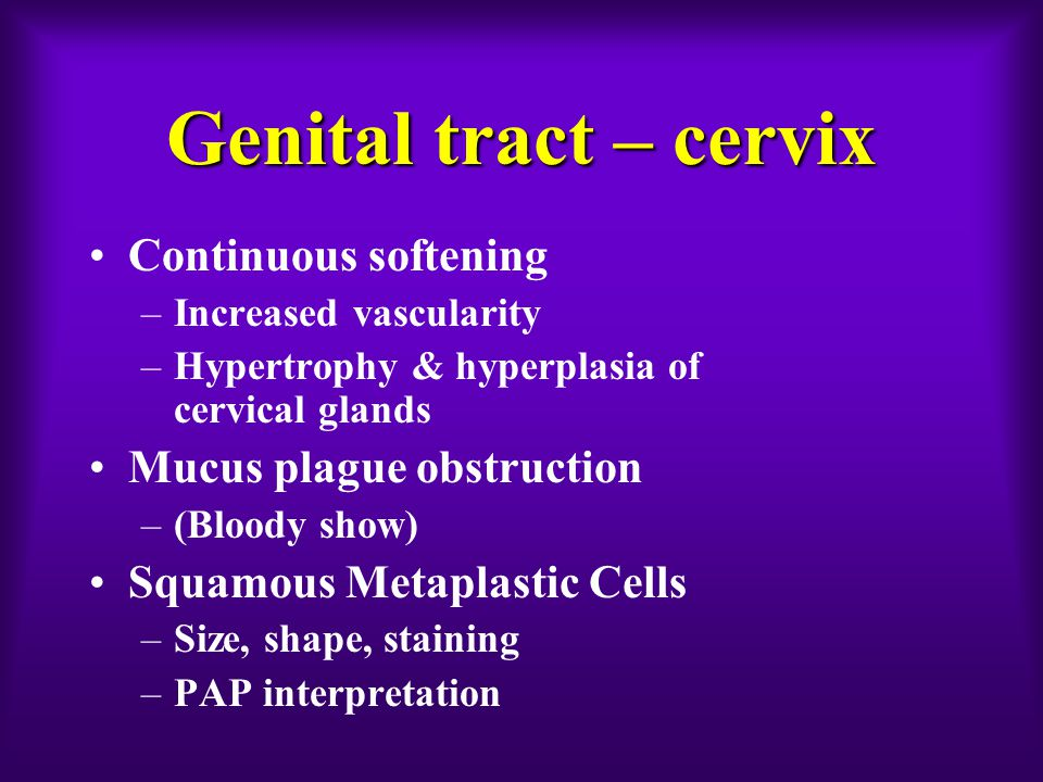 Genital tract – cervix Continuous softening –Increased vascularity –Hypertrophy & hyperplasia of cervical glands Mucus plague obstruction –(Bloody show) Squamous Metaplastic Cells –Size, shape, staining –PAP interpretation