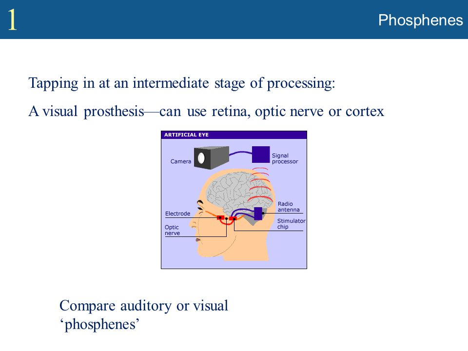 1 Phosphenes Tapping in at an intermediate stage of processing: A visual prosthesis—can use retina, optic nerve or cortex Compare auditory or visual '