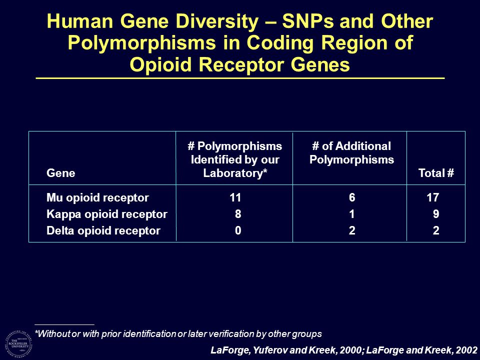 Human Gene Diversity – SNPs and Other Polymorphisms in Coding Region of Opioid Receptor Genes # Polymorphisms Identified by our Laboratory* # of Additional Polymorphisms GeneTotal # Mu opioid receptor11617 Kappa opioid receptor819 Delta opioid receptor 022 *Without or with prior identification or later verification by other groups LaForge, Yuferov and Kreek, 2000; LaForge and Kreek, 2002