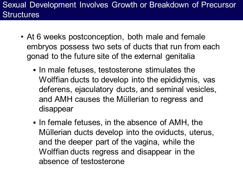 Sexual Development Involves Growth or Breakdown of Precursor Structures At 6 weeks postconception, both male and female embryos possess two sets of du