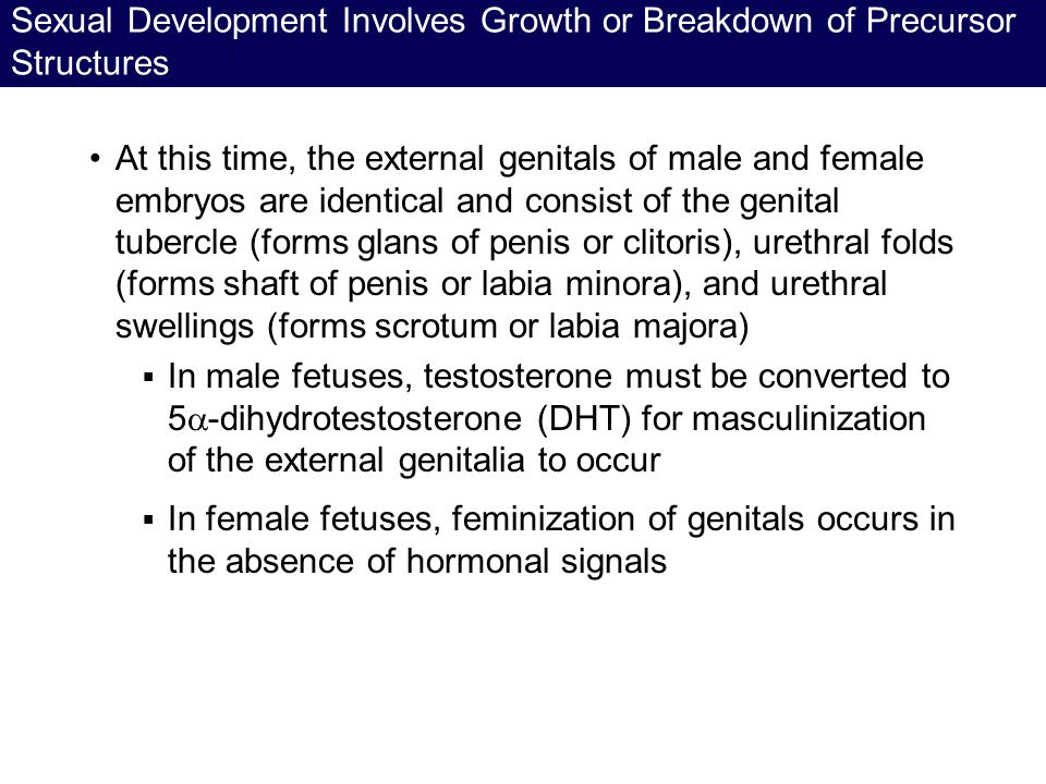 Sexual Development Involves Growth or Breakdown of Precursor Structures At this time, the external genitals of male and female embryos are identical a