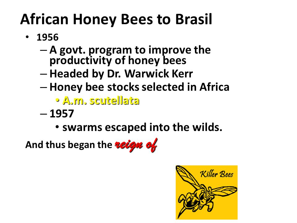 African Honey Bees to Brasil 1956 1956 – A govt.