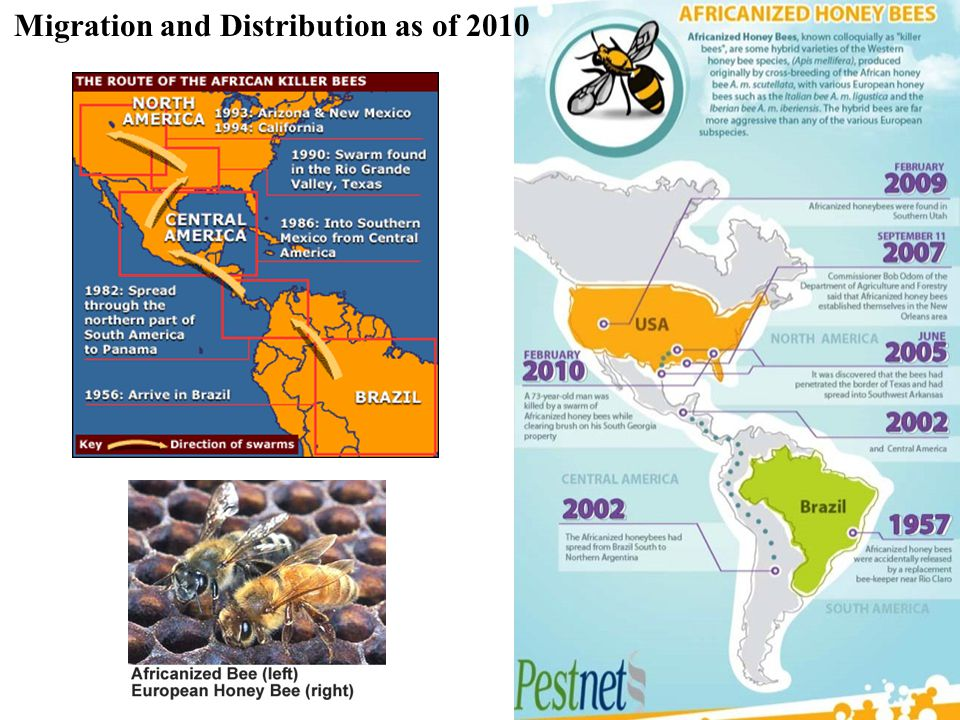 Migration and Distribution as of 2010
