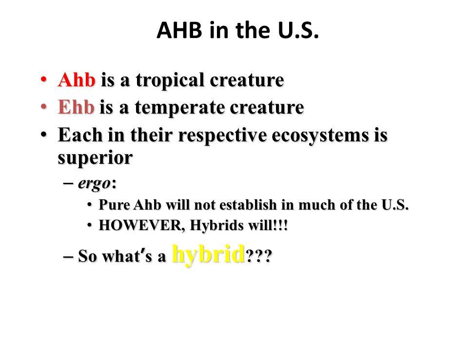 AHB in the U.S. Ahb is a tropical creature Ahb is a tropical creature Ehb is a temperate creature Ehb is a temperate creature Each in their respective