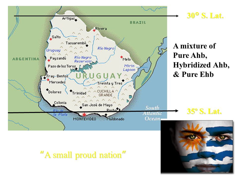A small proud nation 30° S. Lat. 35º S. Lat. A mixture of Pure Ahb, Hybridized Ahb, & Pure Ehb