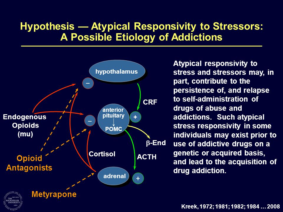 Endogenous Opioids (mu) – –  -End adrenal CRF POMC hypothalamus ACTH anterior pituitary Cortisol + + Atypical responsivity to stress and stressors may, in part, contribute to the persistence of, and relapse to self-administration of drugs of abuse and addictions.
