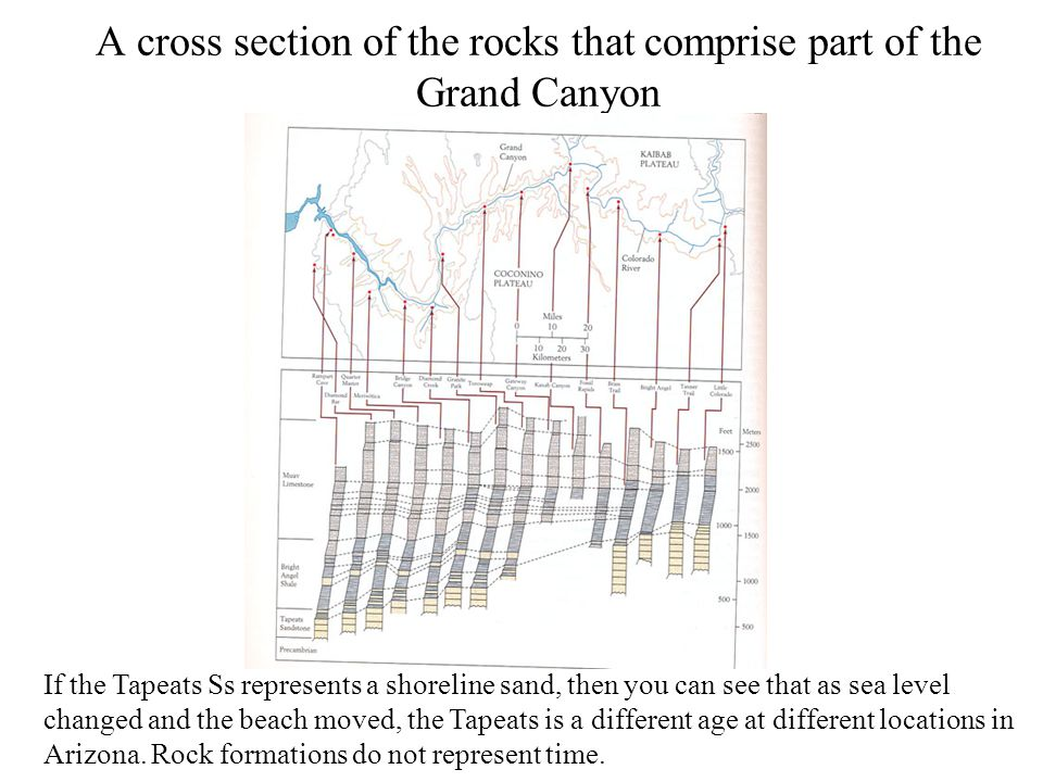 A cross section of the rocks that comprise part of the Grand Canyon If the Tapeats Ss represents a shoreline sand, then you can see that as sea level
