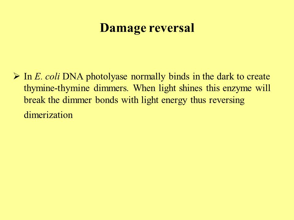 Damage reversal  In E. coli DNA photolyase normally binds in the dark to create thymine-thymine dimmers. When light shines this enzyme will break the