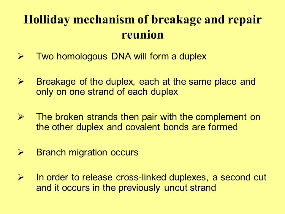 Holliday mechanism of breakage and repair reunion  Two homologous DNA will form a duplex  Breakage of the duplex, each at the same place and only on