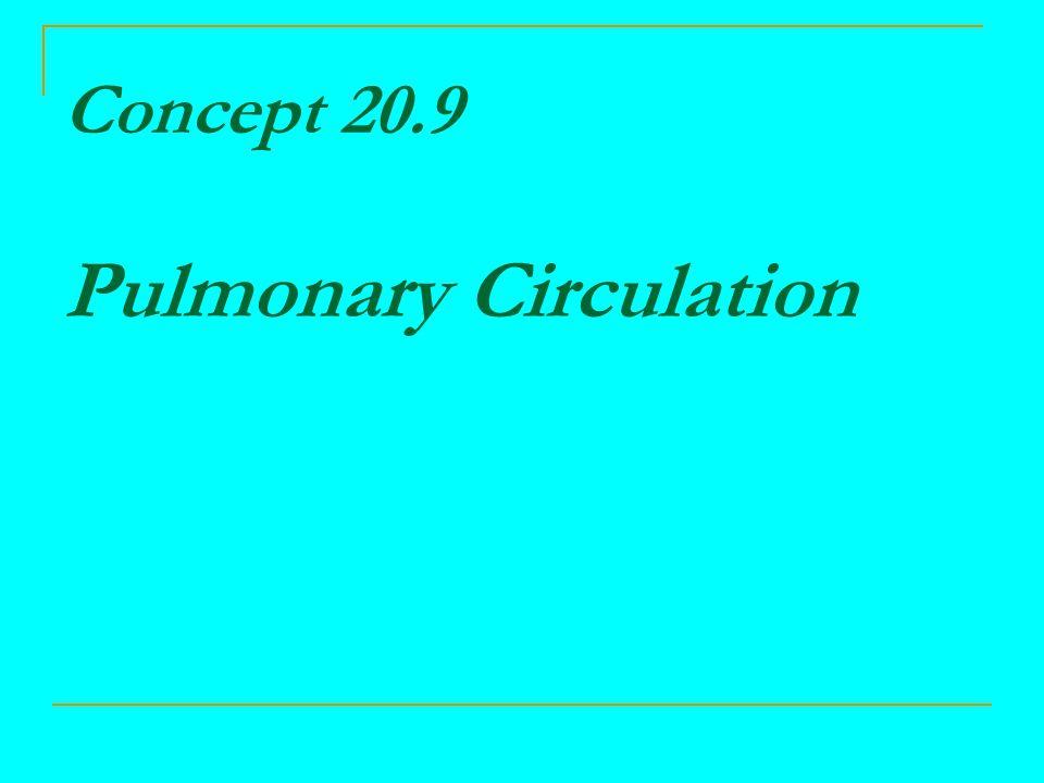 Concept 20.9 Pulmonary Circulation