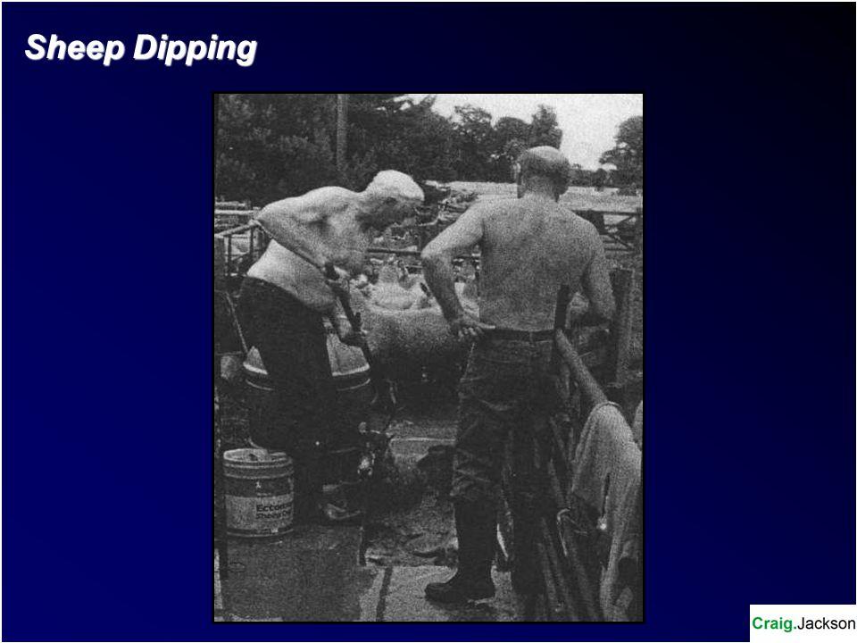 Sheep Dipping