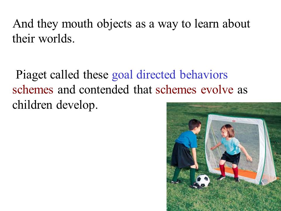 And they mouth objects as a way to learn about their worlds. Piaget called these goal directed behaviors schemes and contended that schemes evolve as