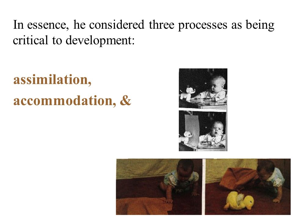 In essence, he considered three processes as being critical to development: assimilation, accommodation, &