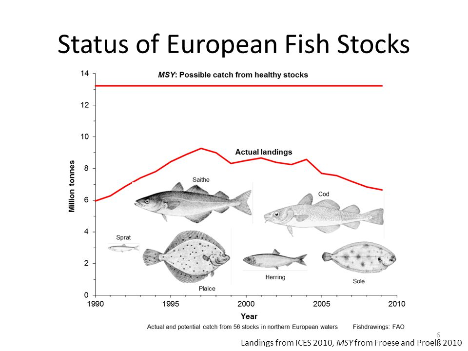 Status of European Fish Stocks 6 Landings from ICES 2010, MSY from Froese and Proelß 2010