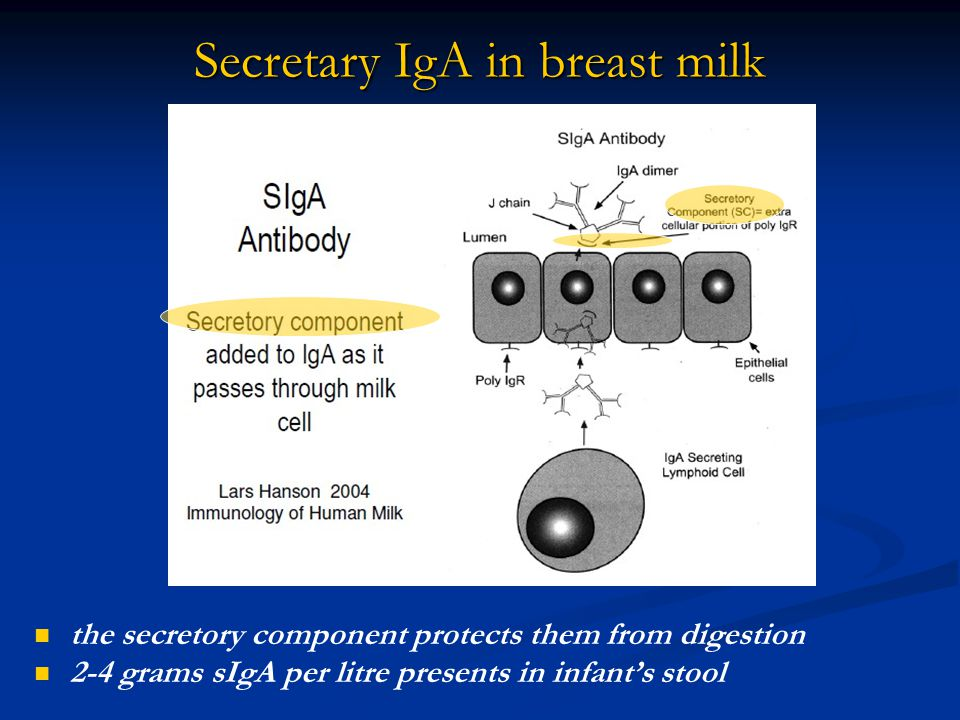 Secretary IgA in breast milk the secretory component protects them from digestion 2-4 grams sIgA per litre presents in infant's stool