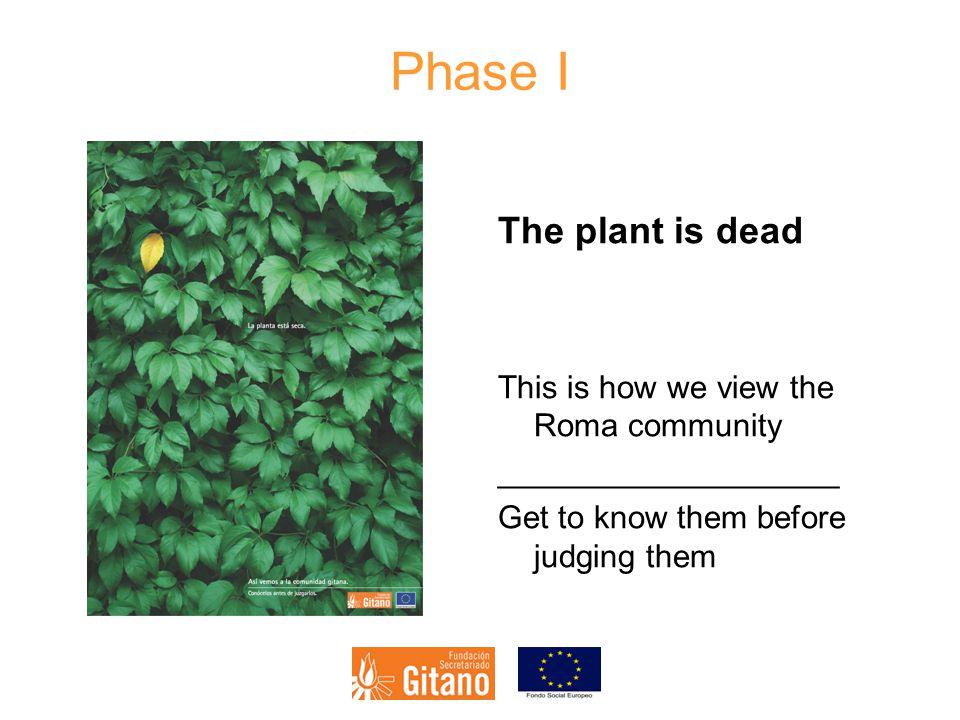 Phase I The plant is dead This is how we view the Roma community ___________________ Get to know them before judging them