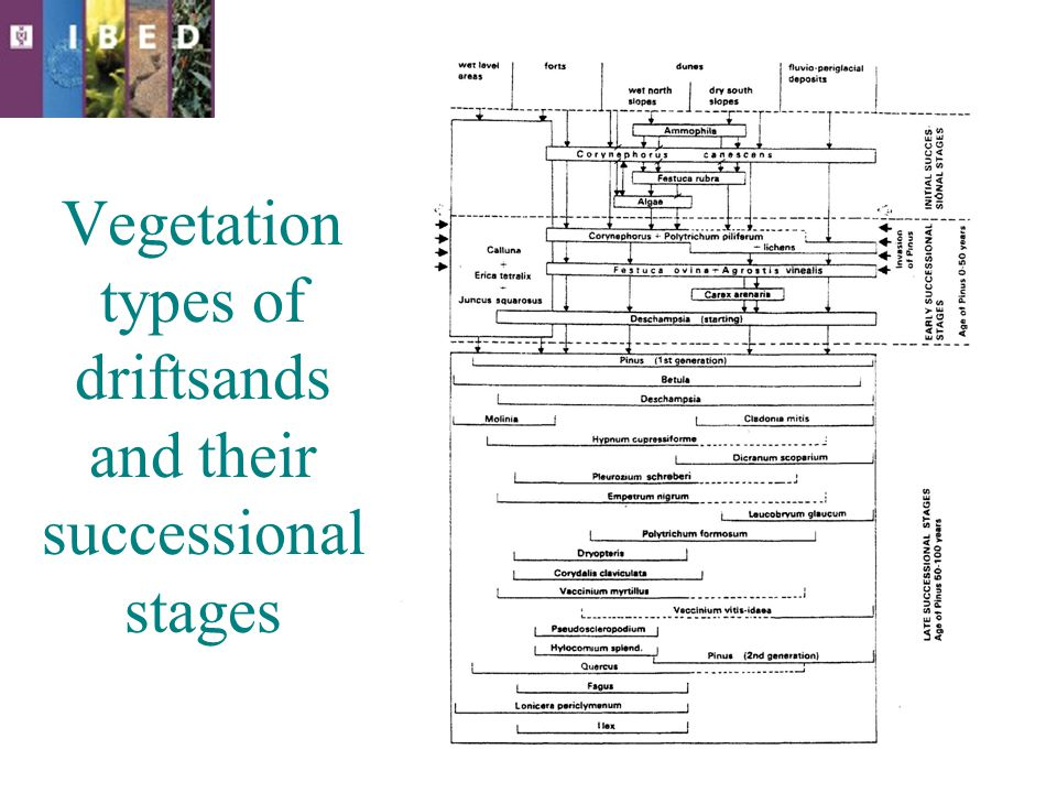 Vegetation types of driftsands and their successional stages
