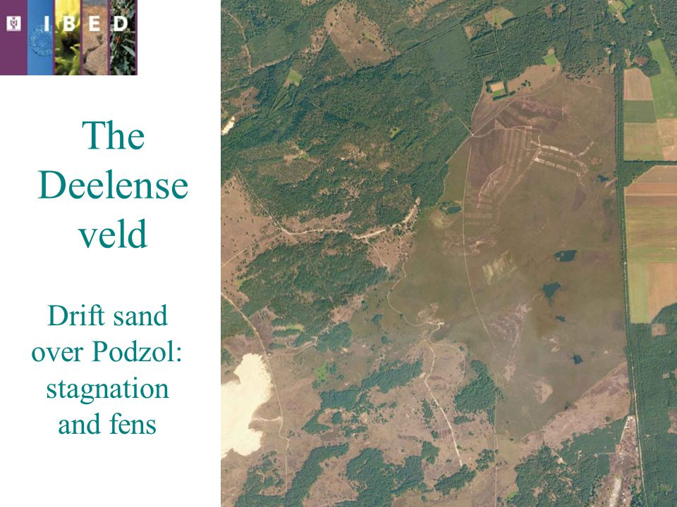 The Deelense veld Drift sand over Podzol: stagnation and fens
