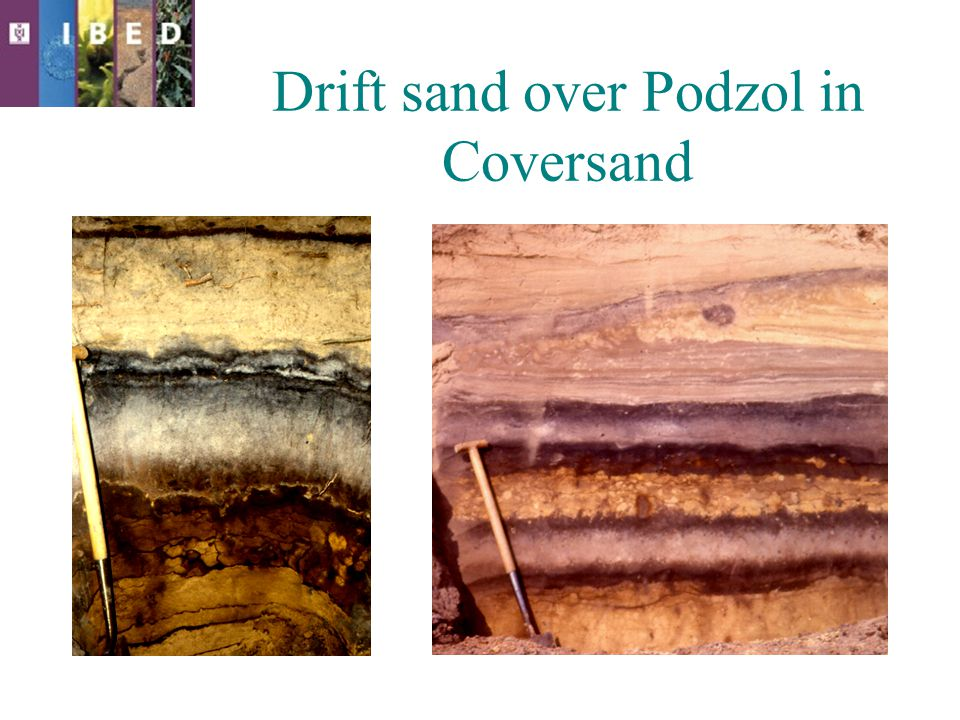 Drift sand over Podzol in Coversand