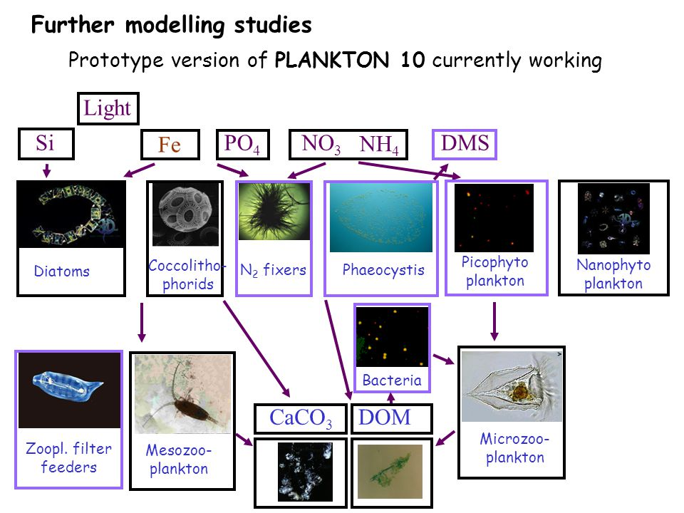 Further modelling studies Prototype version of PLANKTON 10 currently working Diatoms N 2 fixers Phaeocystis Nanophyto plankton Fe CaCO 3 DMS DOM Mesozoo- plankton Microzoo- plankton Zoopl.