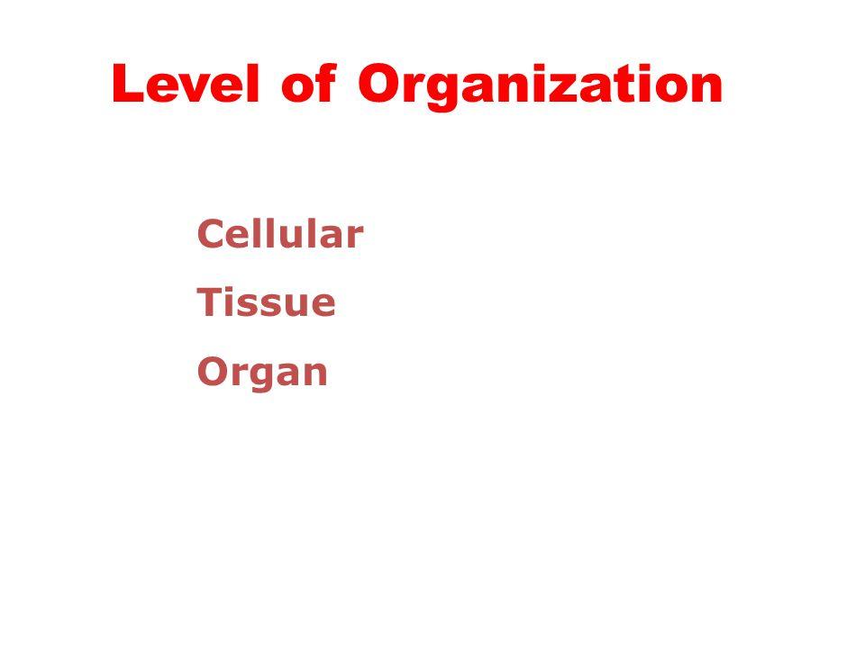 Level of Body Organization Cell (multi) - Phylum Porifera Tissue - Phylum Cnidaria Organ - Phylum Platyhelminthes onward…