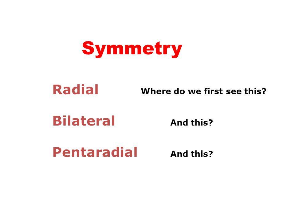 Symmetry Radial Phylum Cnidaria Bilateral Phylum Platyhelminthes onward… Pentaradial Phylum Echinodermata except ………Holothuroidea which are secondarily bilaterally symmetrical
