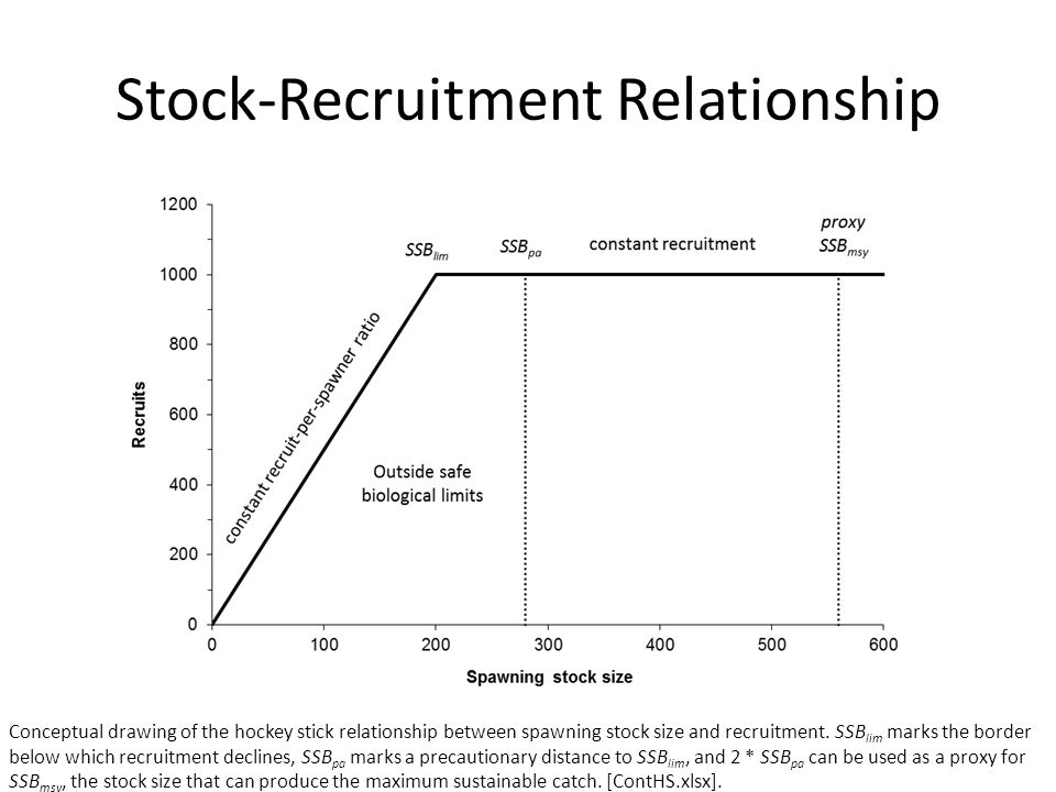 Stock-Recruitment Relationship Conceptual drawing of the hockey stick relationship between spawning stock size and recruitment. SSB lim marks the bord