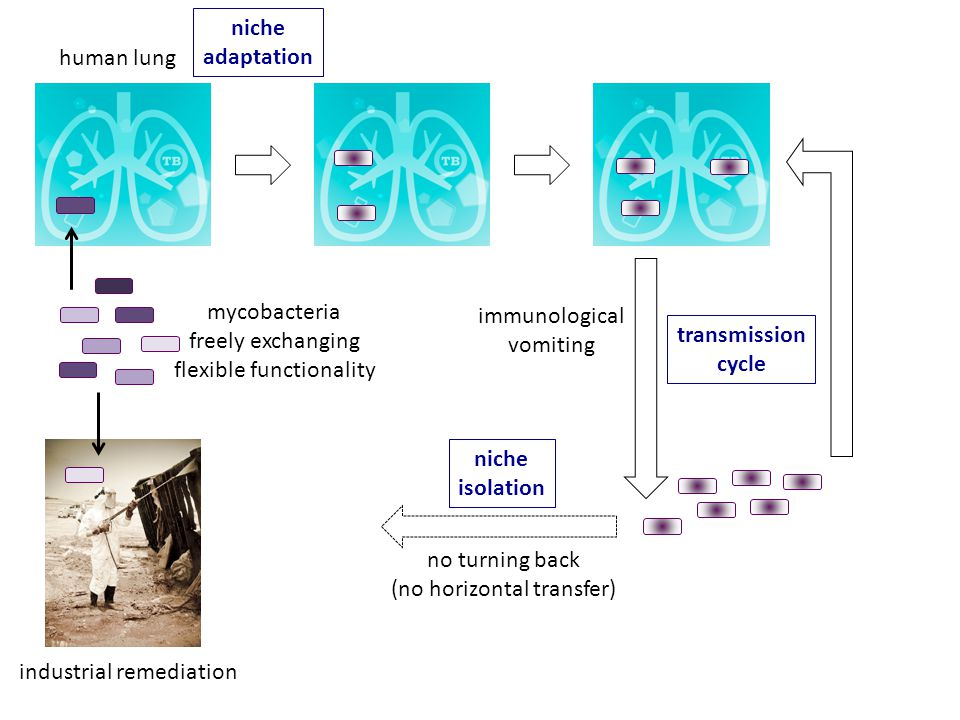 human lung industrial remediation mycobacteria freely exchanging flexible functionality immunological vomiting niche adaptation transmission cycle no